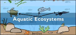 What is aquatic ecosystems