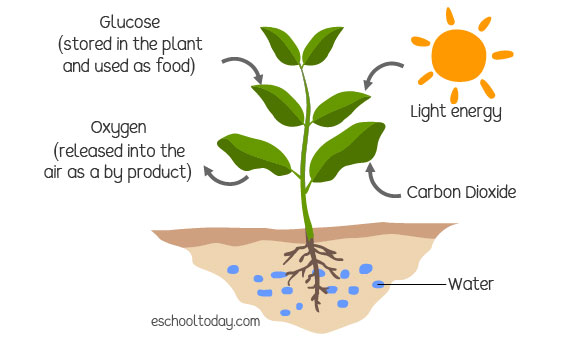 Why do plants need to make their own food?
