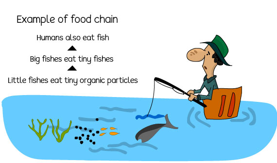 Pollution has consequences on food chains