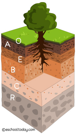 An illustration of The Soil Profile