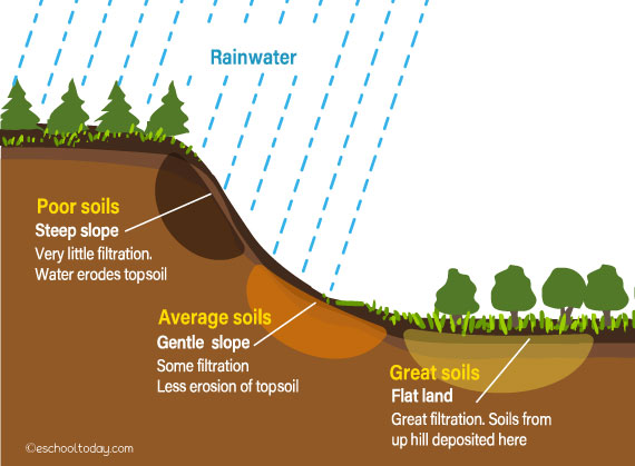 An illustration of the process of soil formation