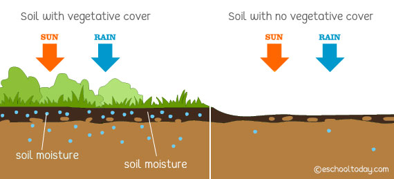 How does vegetation protect soils?