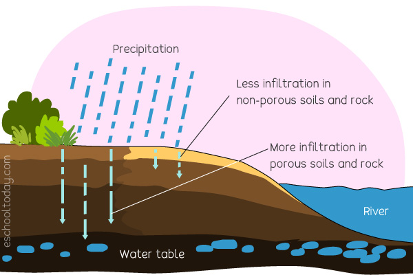 What does infiltration mean in the water cycle?