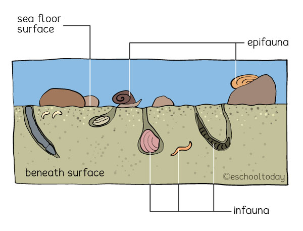 Benthos Systems