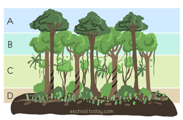 Basic layers of a forest