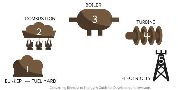 The process of biomass conversion to electricity