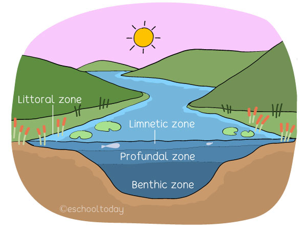 Zones of a lentic system