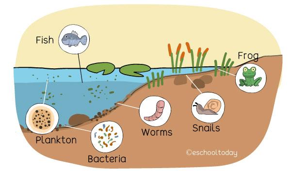 Introduction to aquatic ecosystems | Eschooltoday