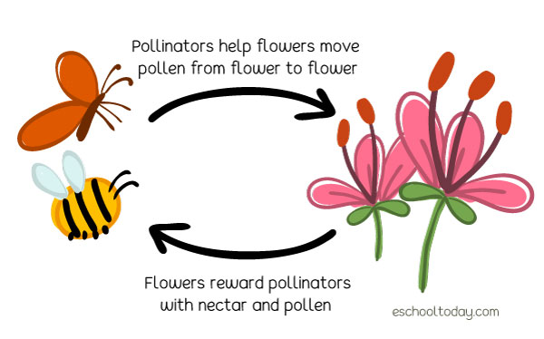 What is the process of pollination like?