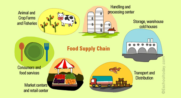 Where in the food supply chain is food wasted the most?