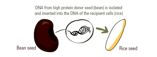 How is GMO done?
