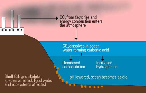 What is causing the oceans to become more acidic?