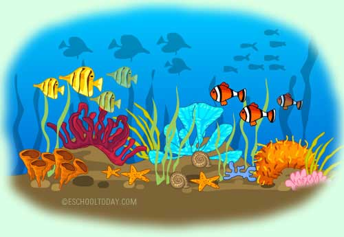 The effects on ocean acidification on humans and the environment